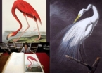 John James Audubon's Birds of America illustrated book sells for £7.3 Million